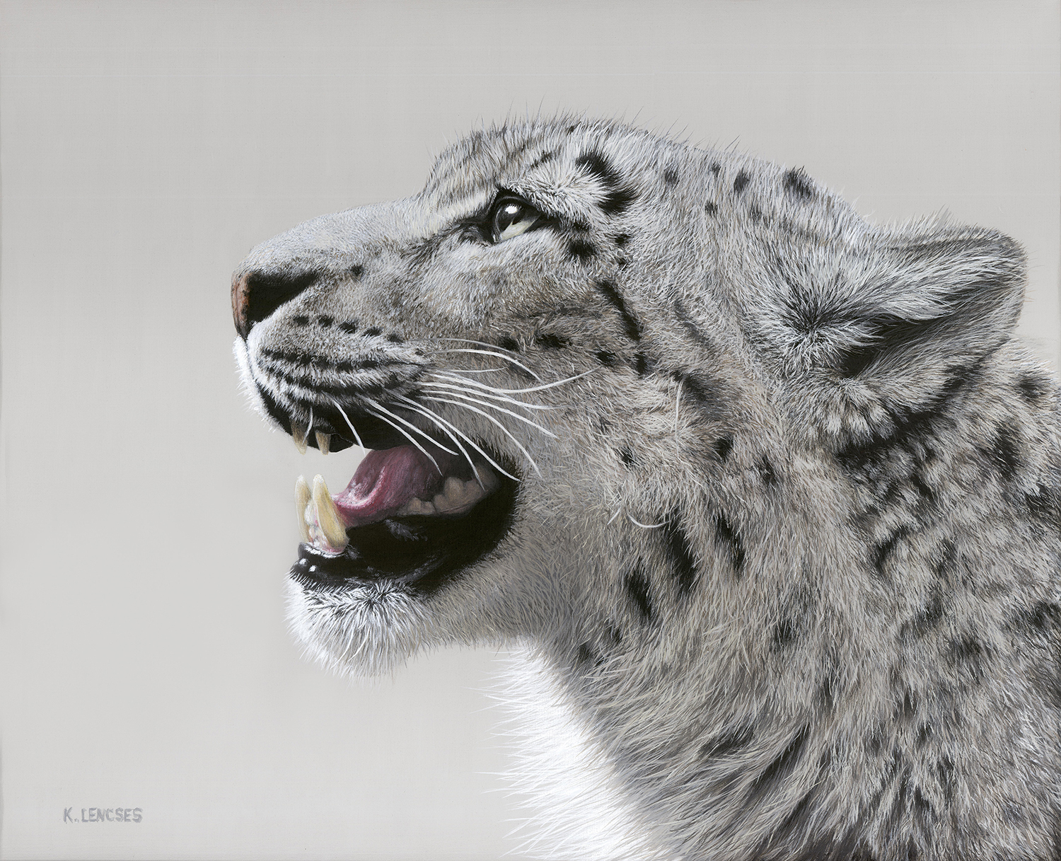 Lencses   akito  the snow leopard
