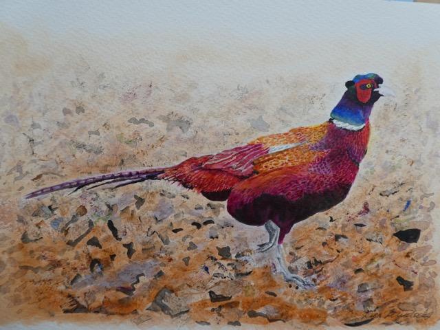 Murdoch image   pheasant