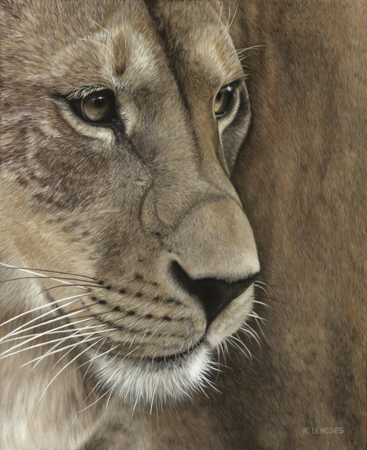 Lencses   zina  the lioness