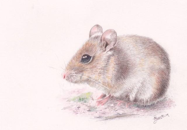 Ferns   field mouse
