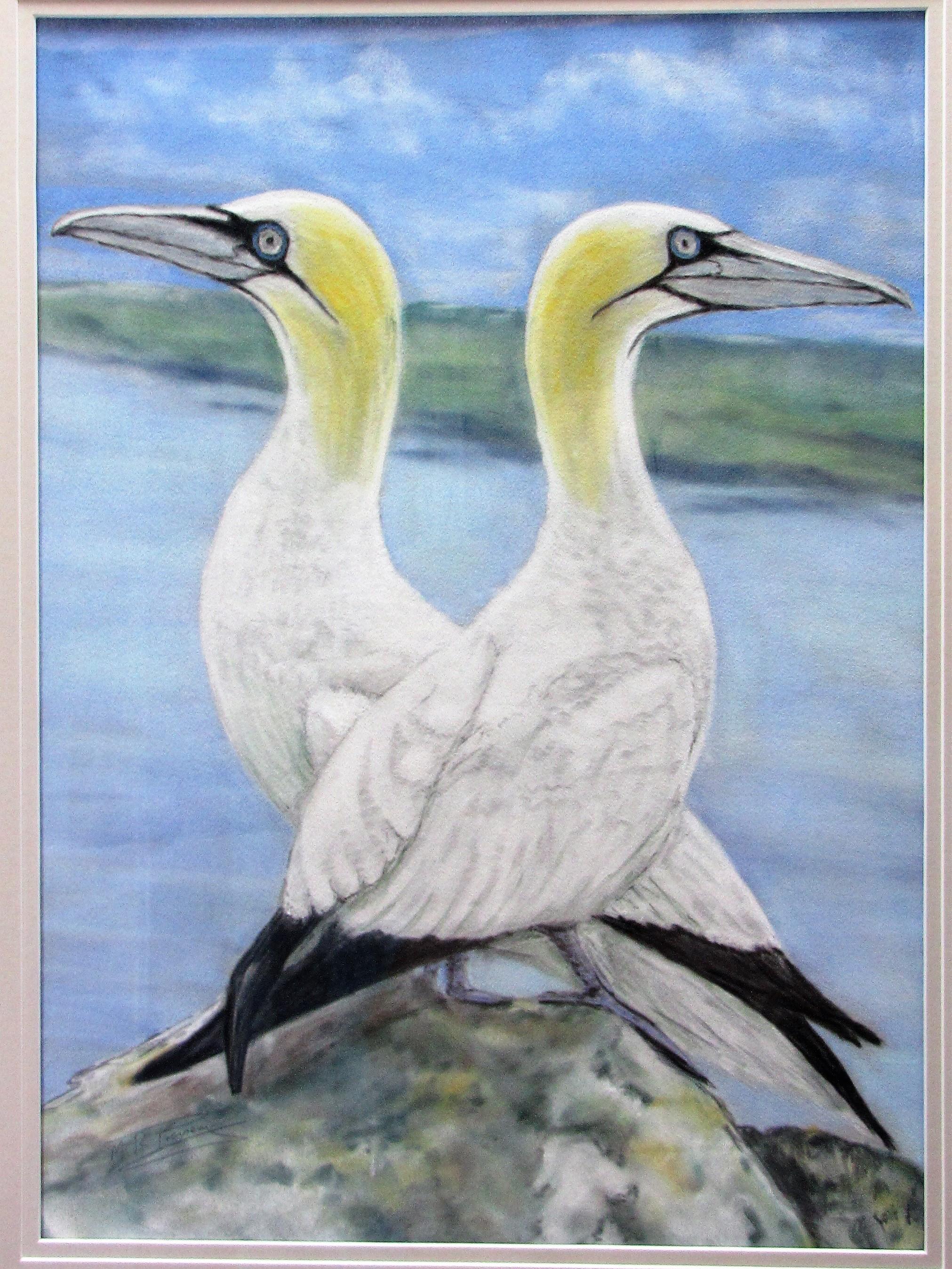Gannets  pastel