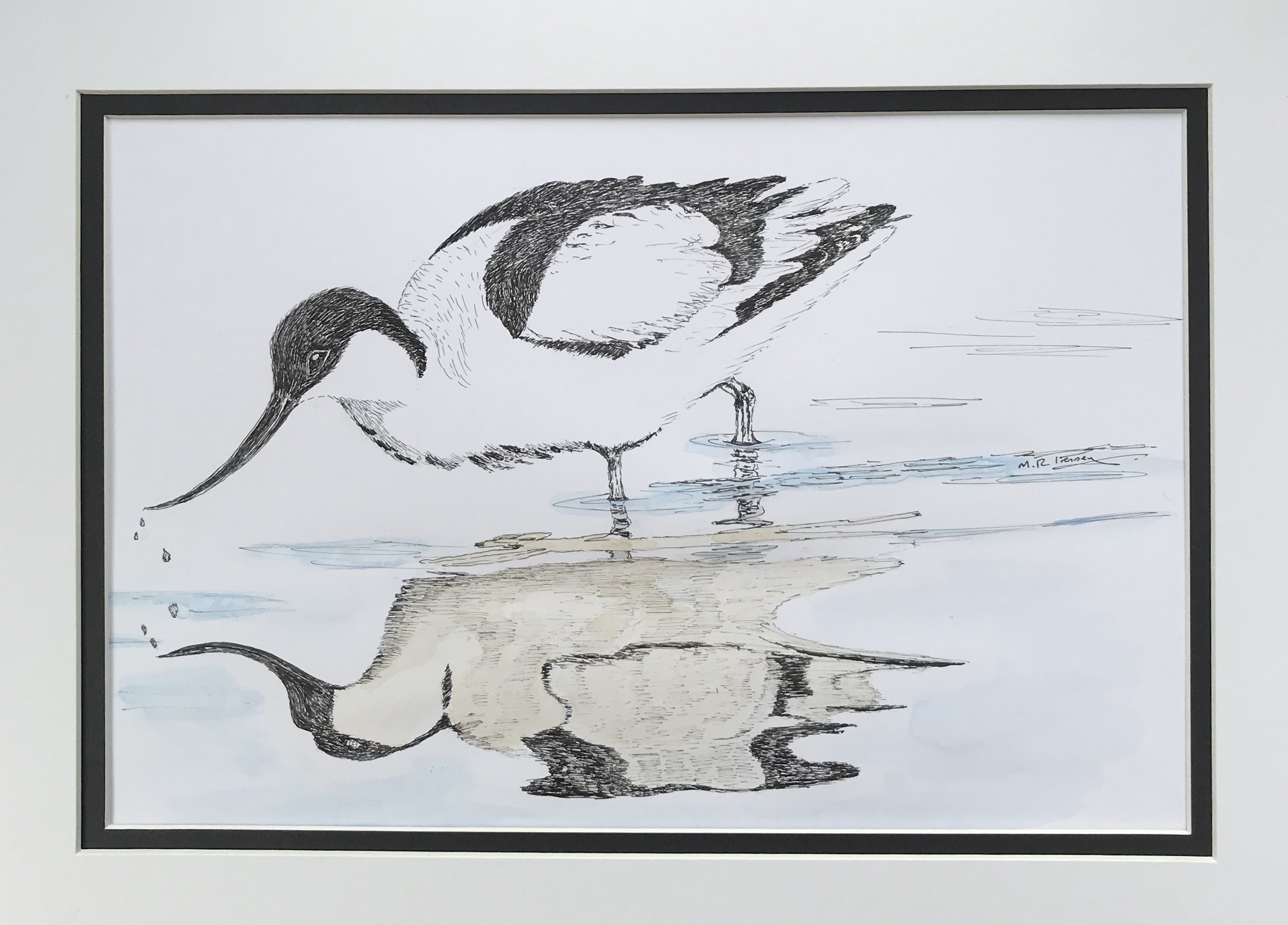 Avocet  pen   ink