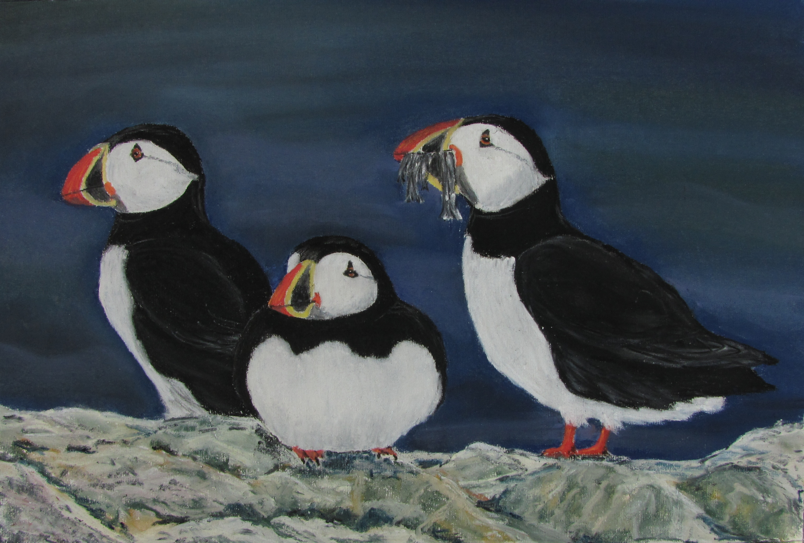 Lundy puffins  pastel