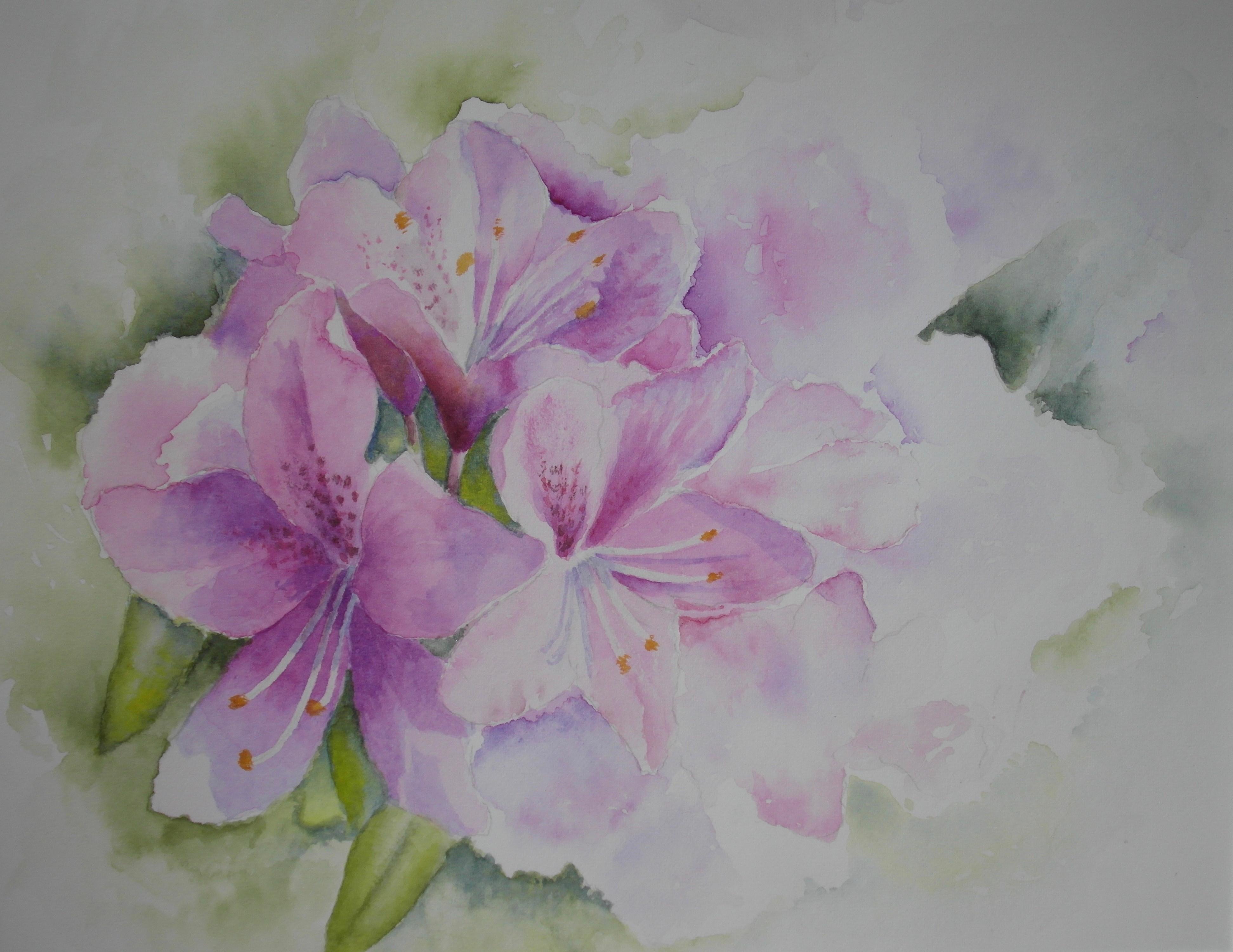 Ferns   flowers