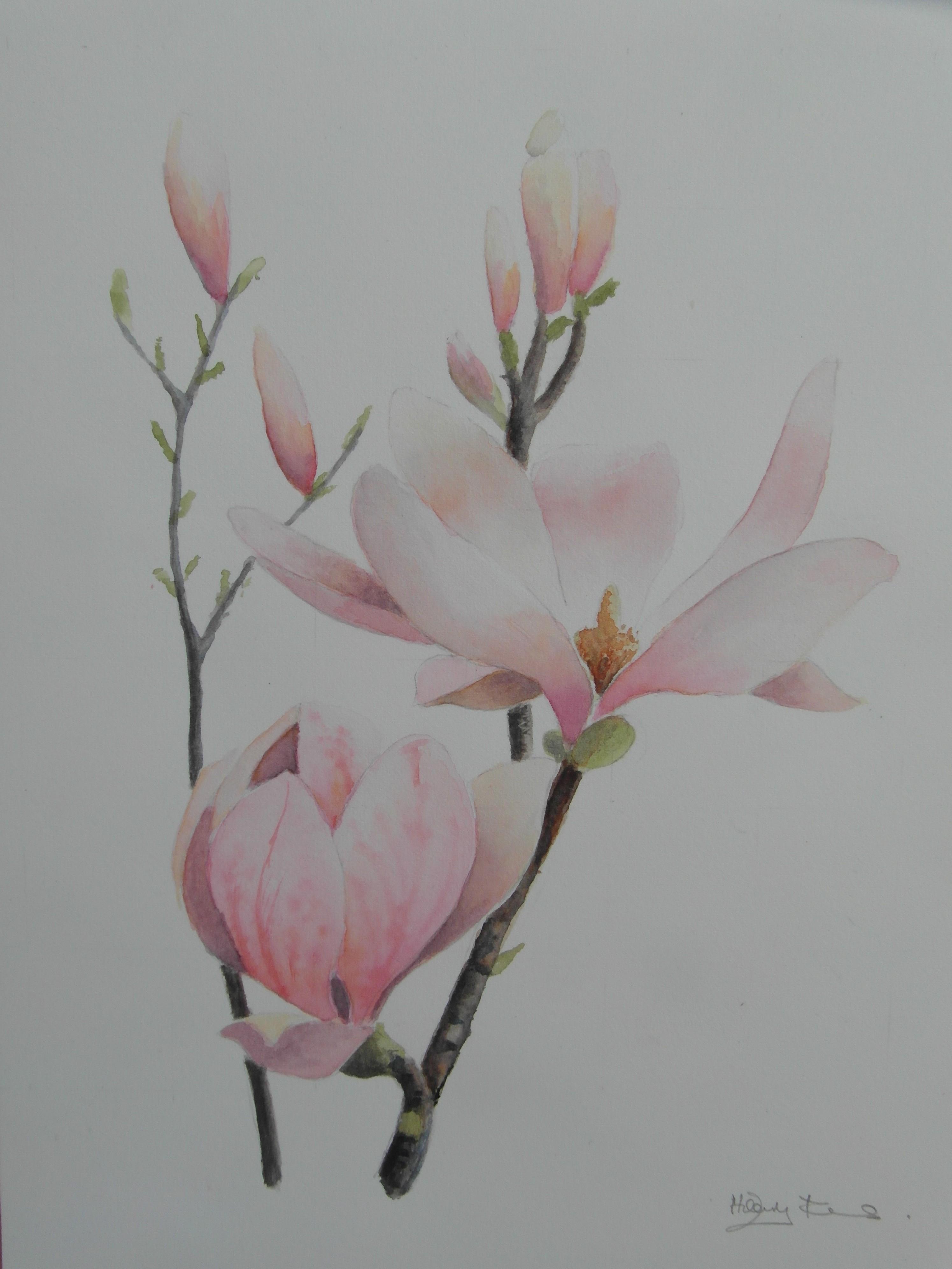 Ferns   magnolia