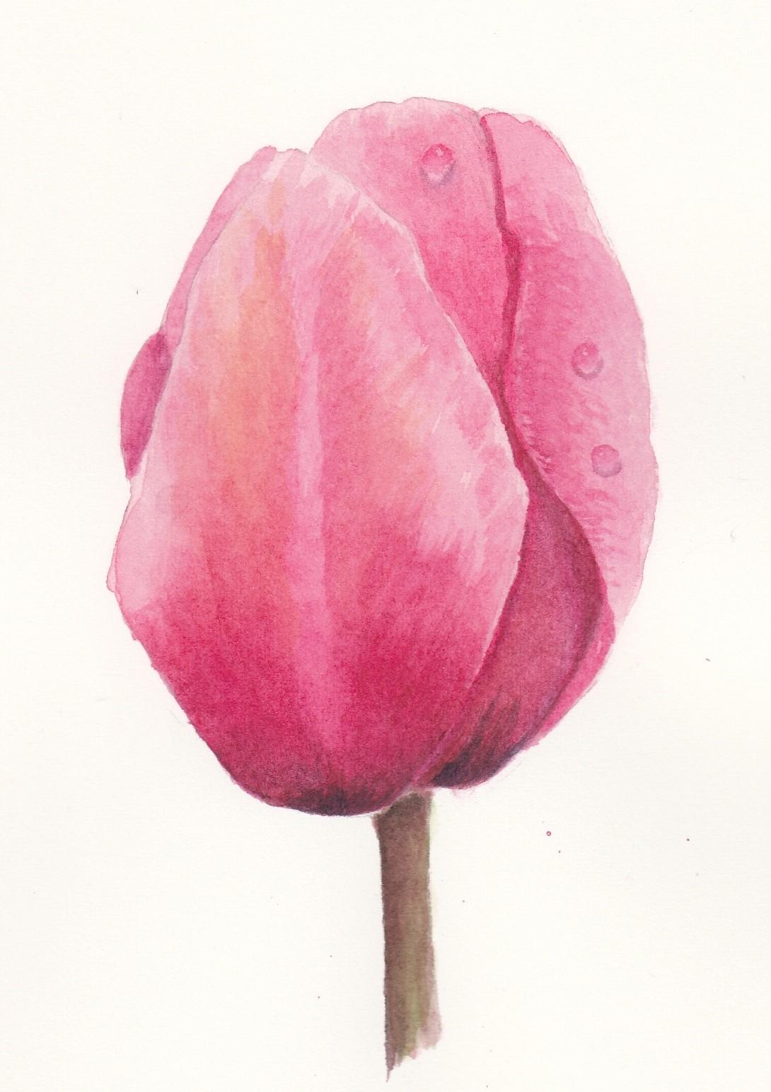Ferns   tulip